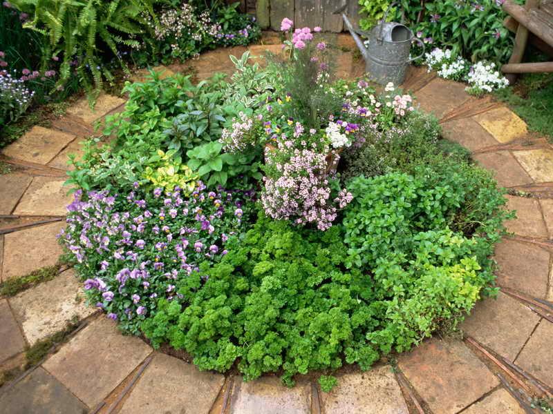 gallery-of-herb-garden