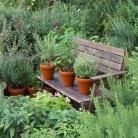 bigstock-herbs-3699997