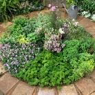 gallery-of-herb-garden