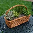herbs-basket-074