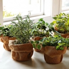 herbs1