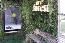 izlozhenia-sabitia-MY-FOREST-2