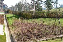 Озеленяване на хотел в Банско - Ню Гарден-ESEN-12-0023