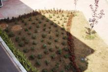 Озеленяване на хотел в Банско - Ню Гарден-NACHALO-25-0048
