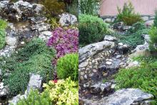 Озеленяване на двор, Драгалевци-10-0010