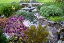 Озеленяване на двор, Драгалевци-3-0003