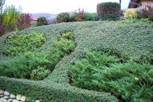 Озеленяване на двор в София, с. Лозен-3-0023