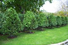 Озеленяване на двор в София, с. Лозен-5-0025