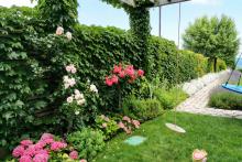 Озеленяване на вила в Лозенец, Бургас-13-0066