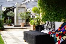 Озеленяване на тераса, София-3-0033