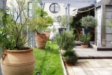 Озеленяване на тераса, София-4-0034