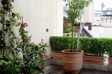 Озеленяване на тераса, София-7-0037