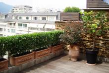 Озеленяване на тераса, София-8-0038