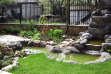 Озеленяване на вила в Лозенец, Бургас-4-0004