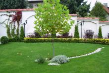 Озеленяване на вила-7-0049