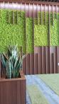 Интериорно озеленяване-2