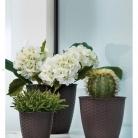 kasphi-katalog-last-giardino-012-012