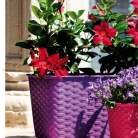 kasphi-katalog-last-giardino-020-020