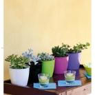 kasphi-katalog-last-giardino-026-026