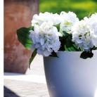 kasphi-katalog-last-giardino-034-034