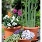 kasphi-katalog-last-giardino-062-062