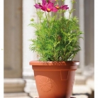 kasphi-katalog-last-giardino-082-082