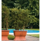 kasphi-katalog-last-giardino-088-088