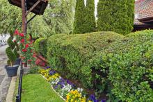 Поддръжка на градини и дворове-14