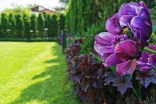Поддръжка на градини и дворове-27
