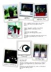 saksii-nikoli-katalog-web_2013-004-004