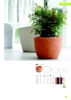 saksii-nikoli-katalog-web_2013-017-017