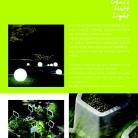 saksii-nikoli-katalog-web_2013-009-009