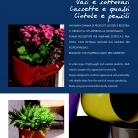 saksii-nikoli-katalog-web_2013-055-055