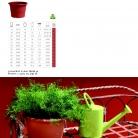 saksii-nikoli-katalog-web_2013-062-062