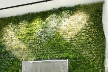 Зелена стена, обект Гора-10
