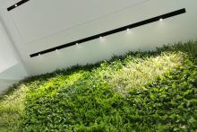 Зелена стена, обект Гора-11