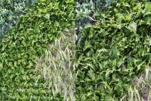 Зелена стена, обект Гора-12