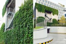 Вертикално озеленяване-10