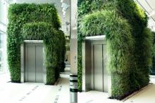 Вертикално озеленяване-11