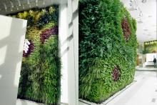 Вертикално озеленяване-12