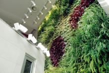 Вертикално озеленяване-13