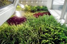 Вертикално озеленяване-15