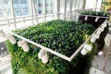 Вертикално озеленяване-16