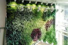 Вертикални градини-17
