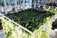 Вертикално озеленяване-21