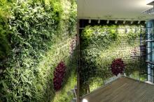 Вертикални градини-22