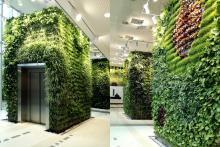 Вертикално озеленяване-23