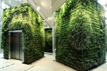Вертикално озеленяване-24