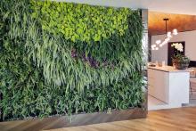 Вертикално озеленяване-25