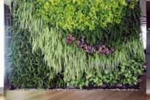 Вертикално озеленяване-26